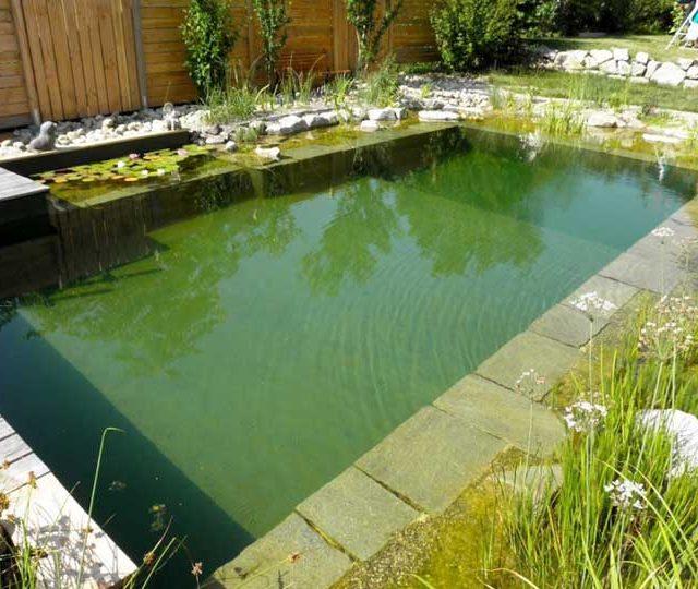 merlet-paysagiste-baignade-piscine-naturelle3