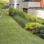 PLANTES GRIMPANTES, GRAMINÉES ET BULBES