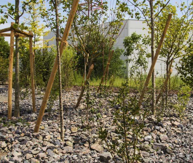 merlet-paysagiste-arbres-et-arbustes-enrochement